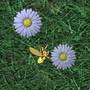 Retrouve les fleurs